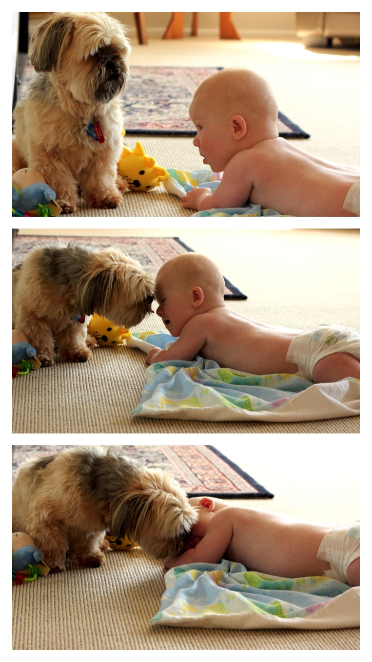 Second-hand dog discovers we have a baby!